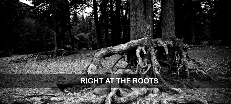 Right at the Roots