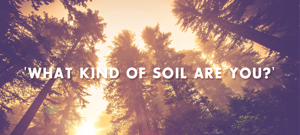 What Kind Of Soil Are You?